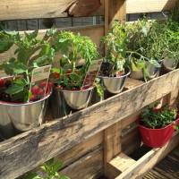 pallet project herb garden