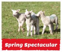 Spring Spectacular at Hatton Adventure World